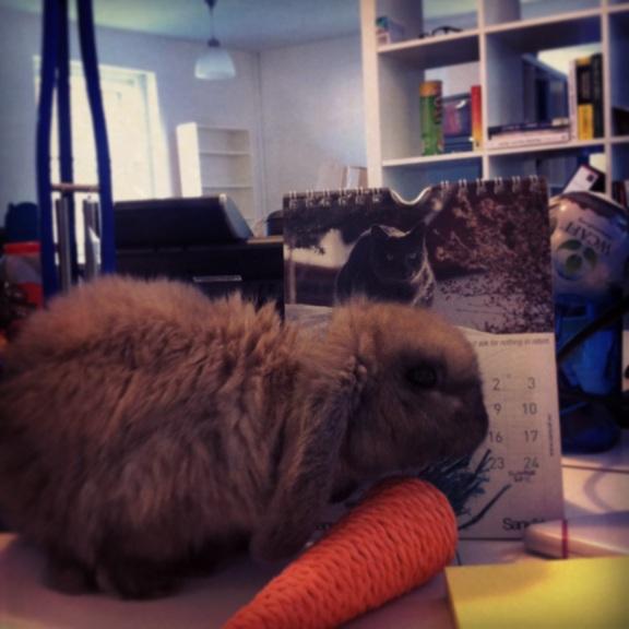Conejo trabajador
