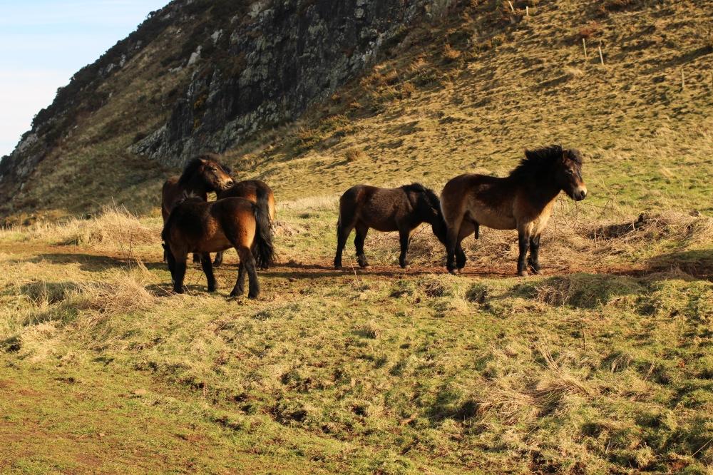 North Berwick Ponys