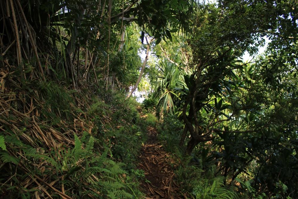 Vegetación Kalalau