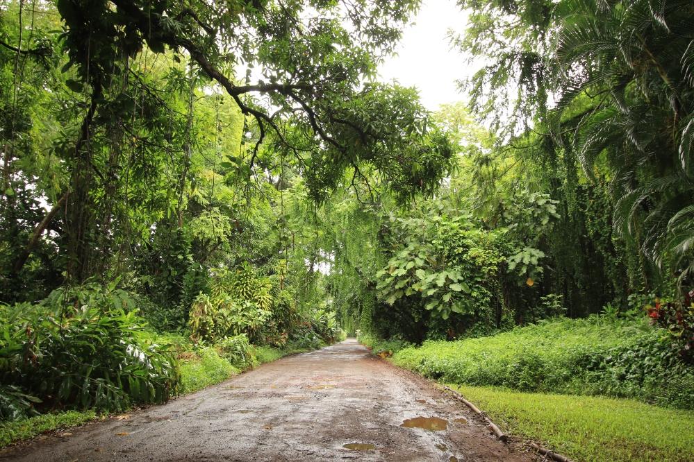 Papaya Farms Road