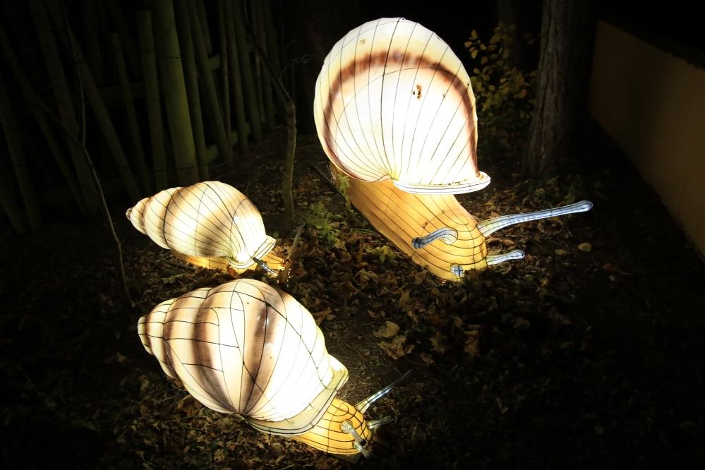 Edinburgh Zoo - Snails