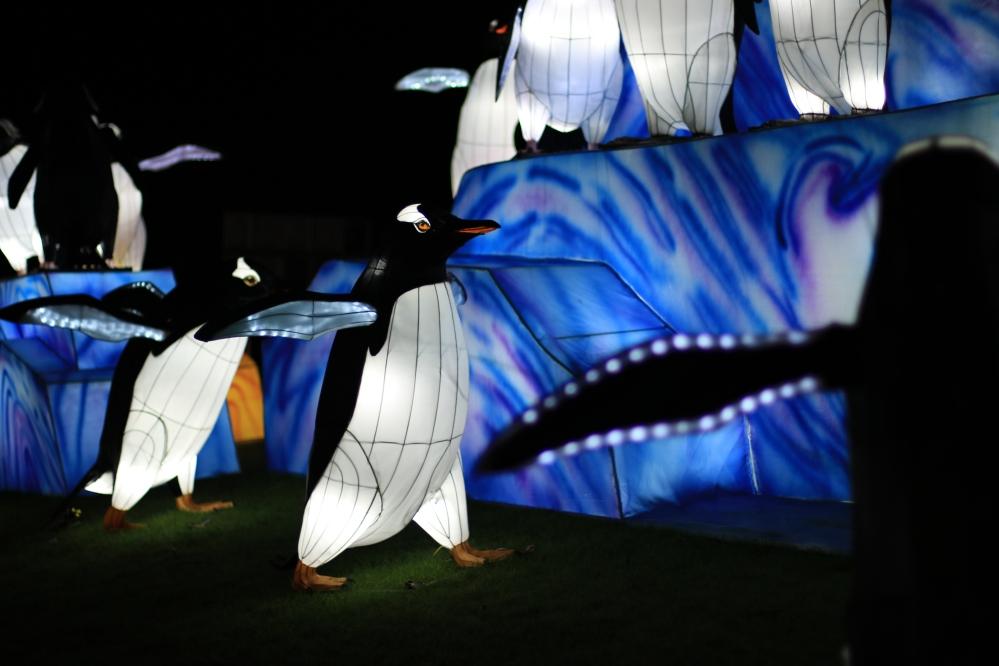 Zoo Lanterns - Penguins