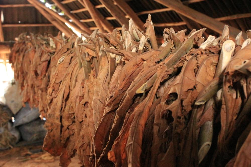 Secadero de tabaco